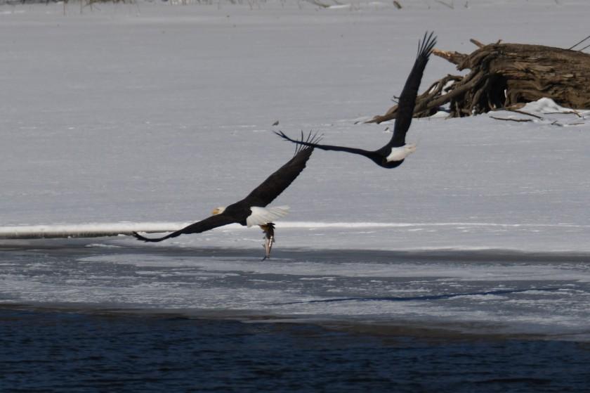 180124bbcut-eagles2