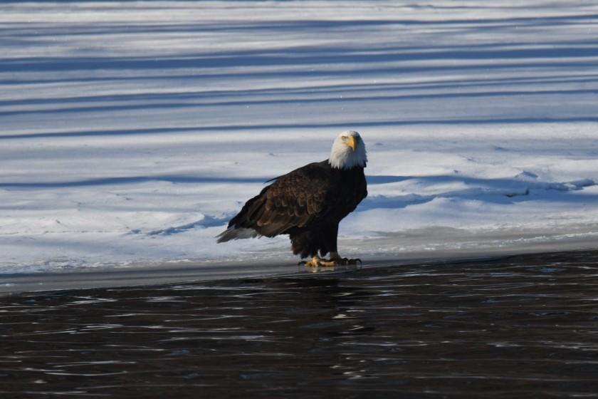 180124bbcut-eagles3