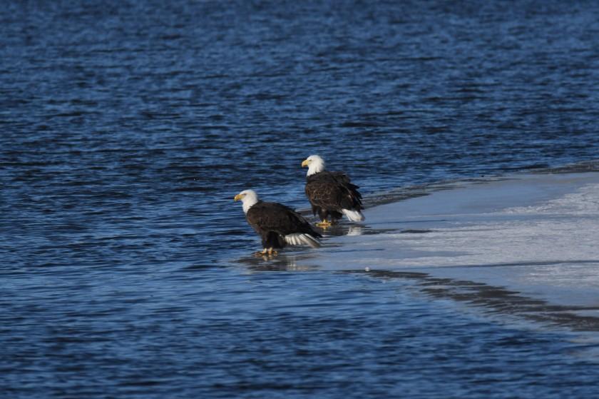 180124bbcut-eagles4