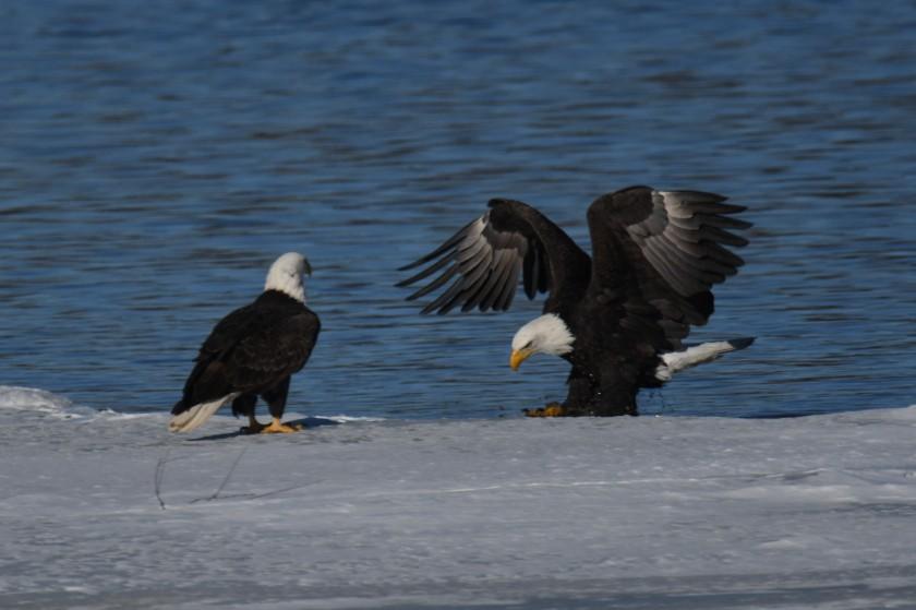 180124bbcut-eagles6