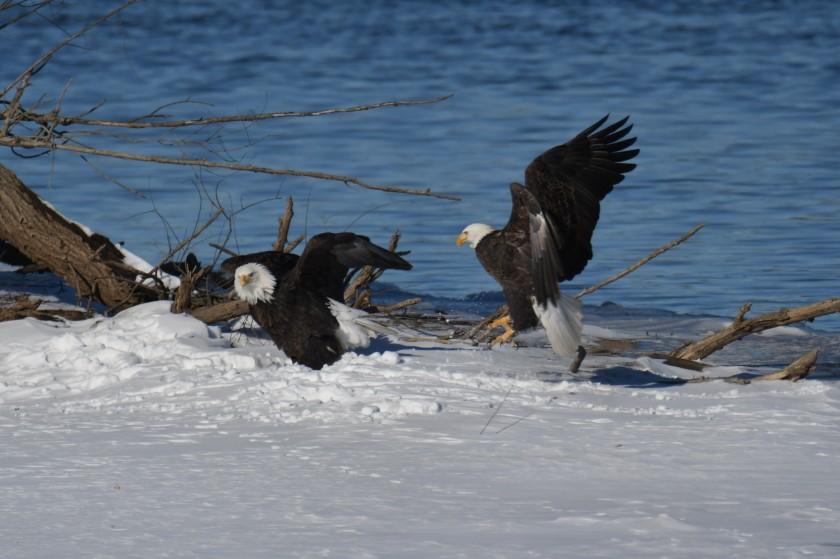 180124bbcut-eagles7