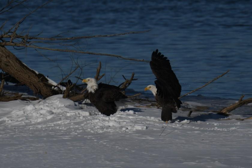 180124bbcut-eagles8
