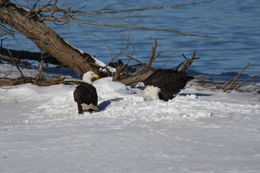 180124bbcut-eagles9