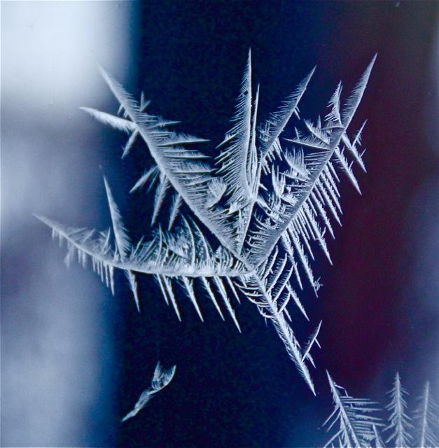 180202bbcut-frost2