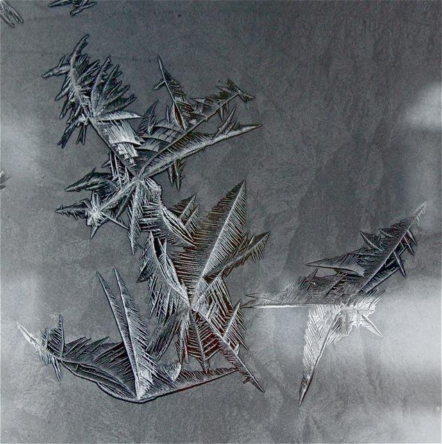 180202bbcut-frost3