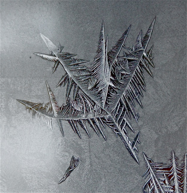 180202bbcut-frost4