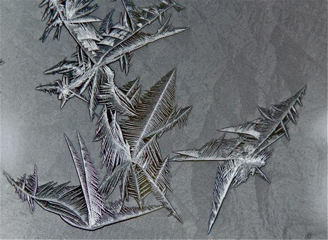 180202bbcut-frost5