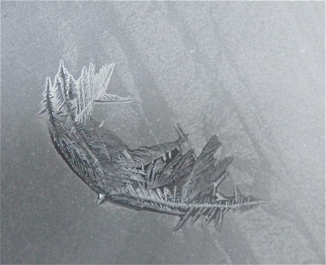 180202bbcut-frost6