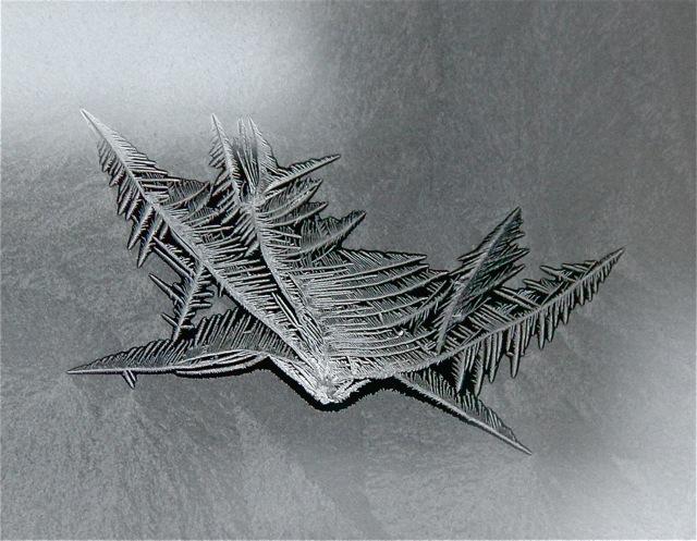 180202bbcut-frost7