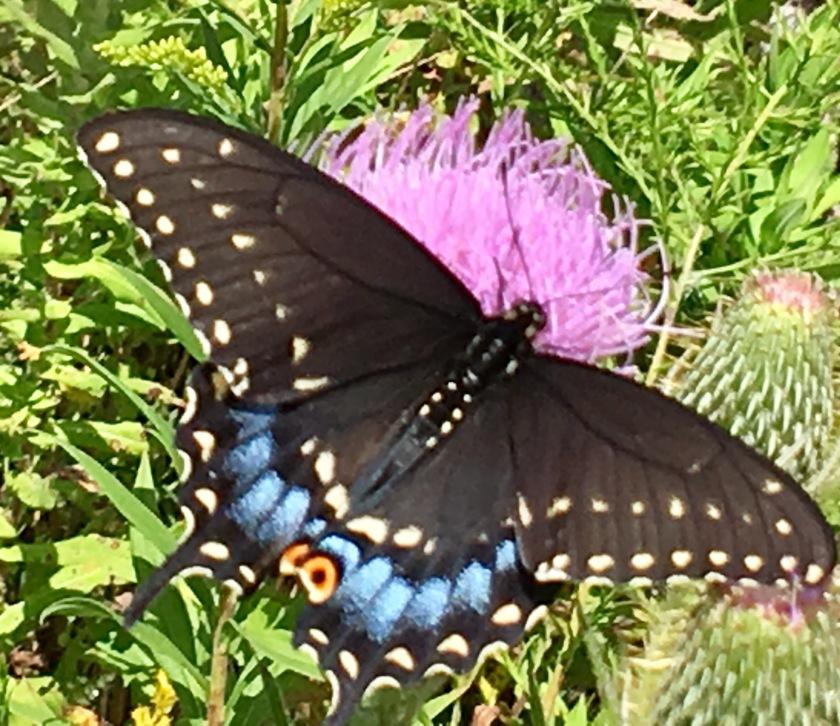 180207bbcut-moth