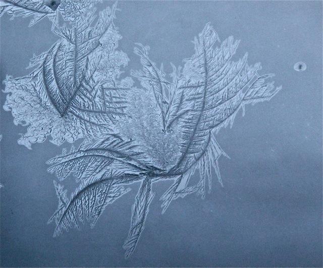 180208bbcut-frost4