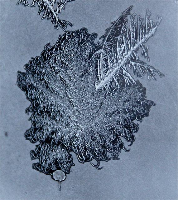 180208bbcut-frost5
