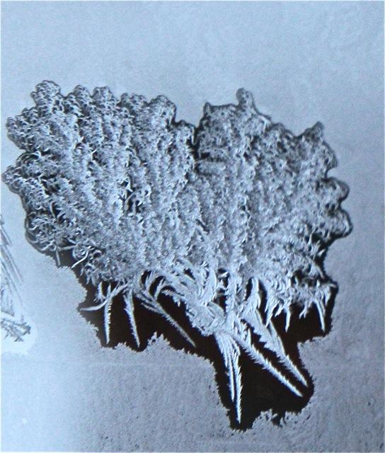 180208bbcut-frost6