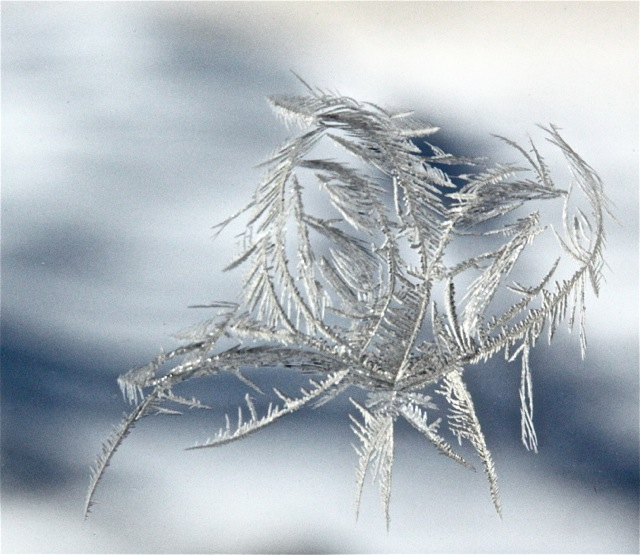 180214bbcut-frostheart