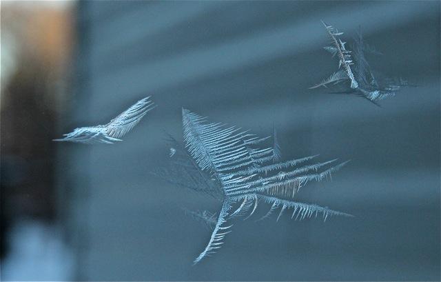 180224bbcut-frostbirds1