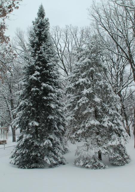 180224bbcut-snow1