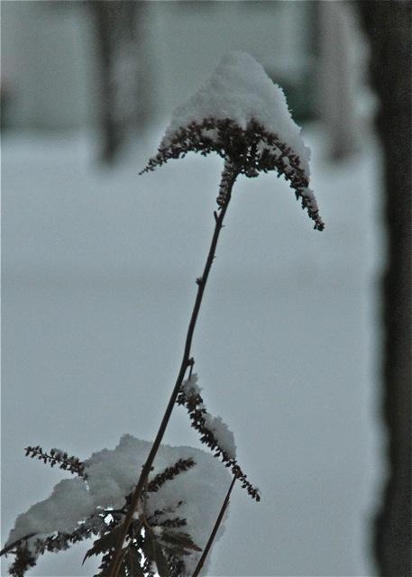 180224bbcut-snow2