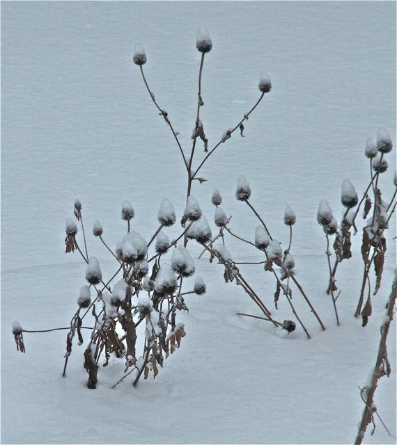 180224bbcut-snow3