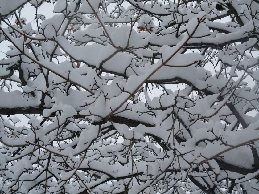 180224bbcut-snowtree