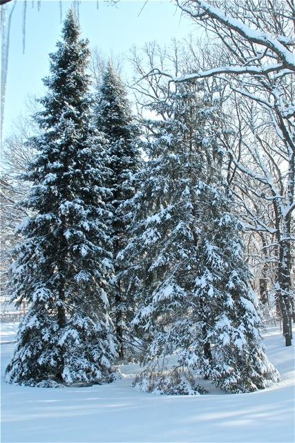180305bbcut-snow1