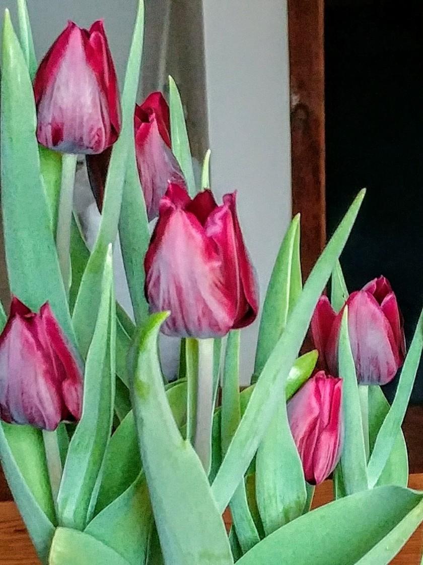 180305bbcut-tulip2