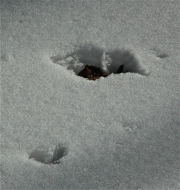 180316bbcut-snowmelt2