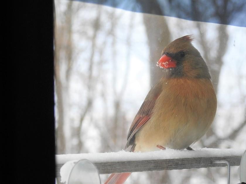 180320bbcut-cardinal1