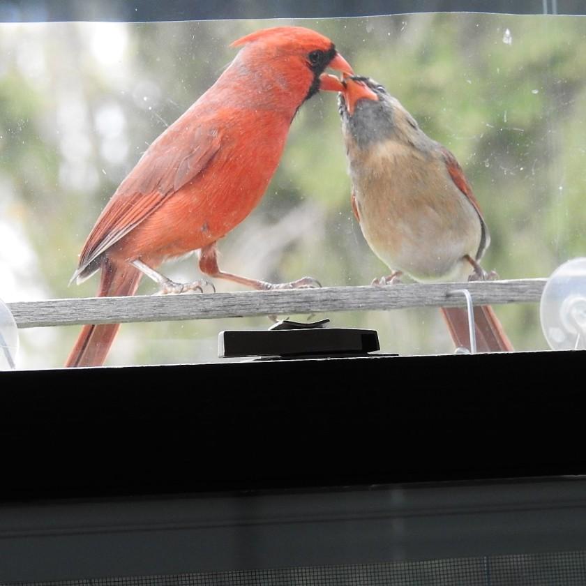 180320bbcut-cardinal2