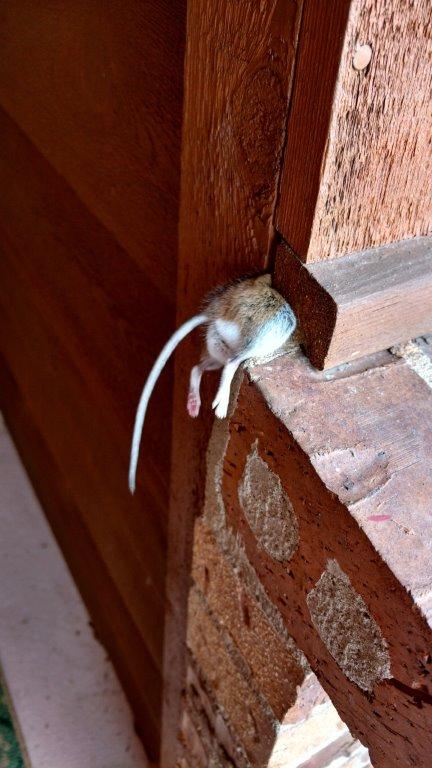 180327bbcut-mouse