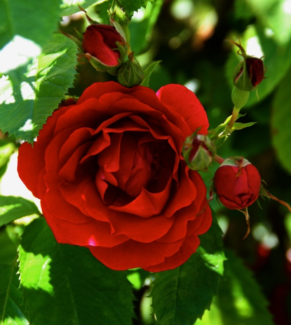 180329bbcut-blooms4