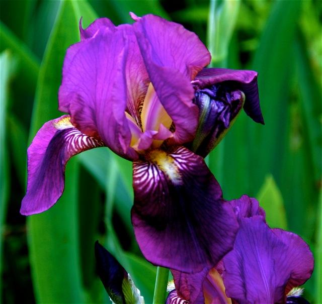 180329bbcut-blooms5