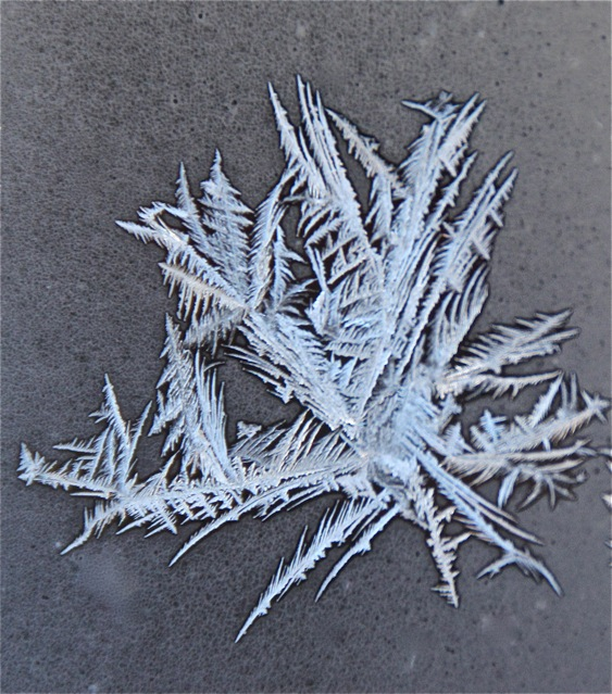 180402bbcut--frost1
