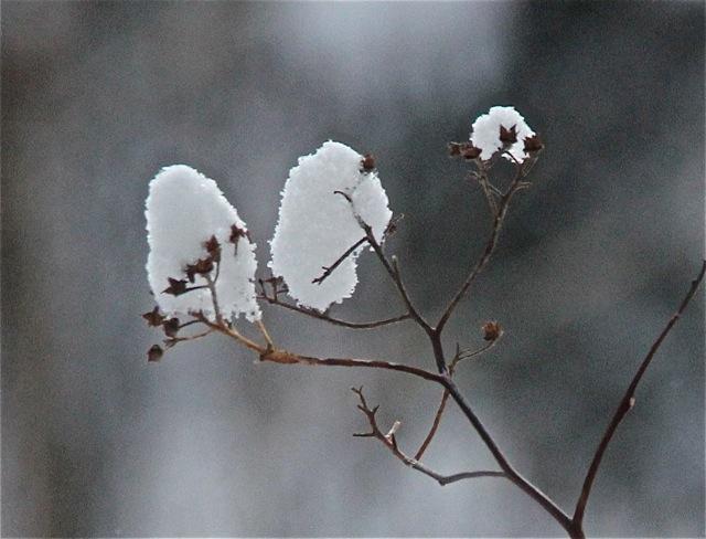 180403bbcut-snowlight1