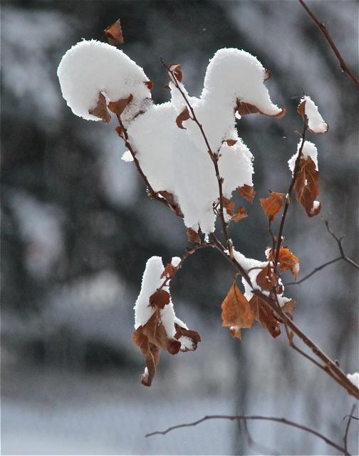 180403bbcut-snowlight2