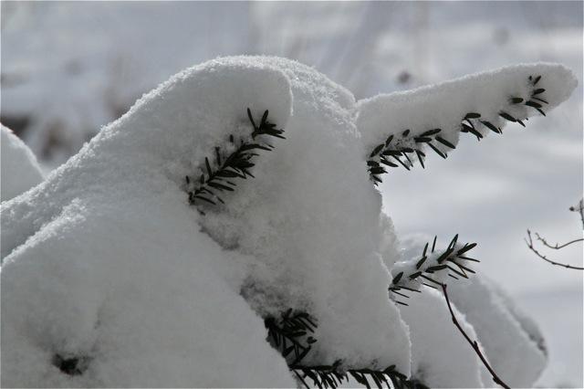 180403bbcut-snowlight3