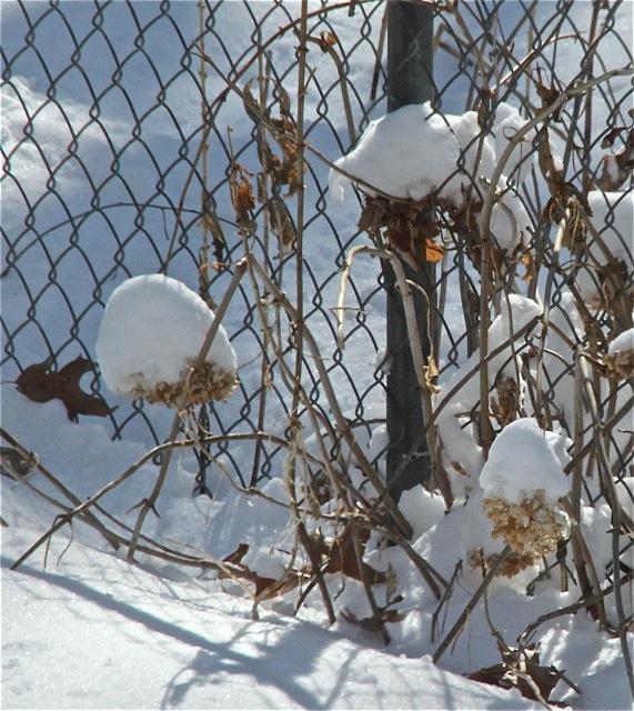 180403bbcut-snowlight6