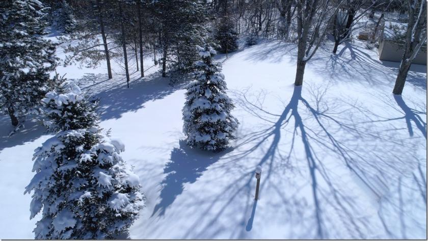 180405bbcut-snowshadows