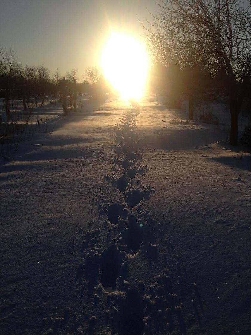 180406bbcut-sunrise