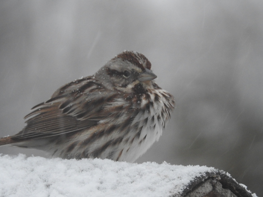 180416bbcut-sparrow