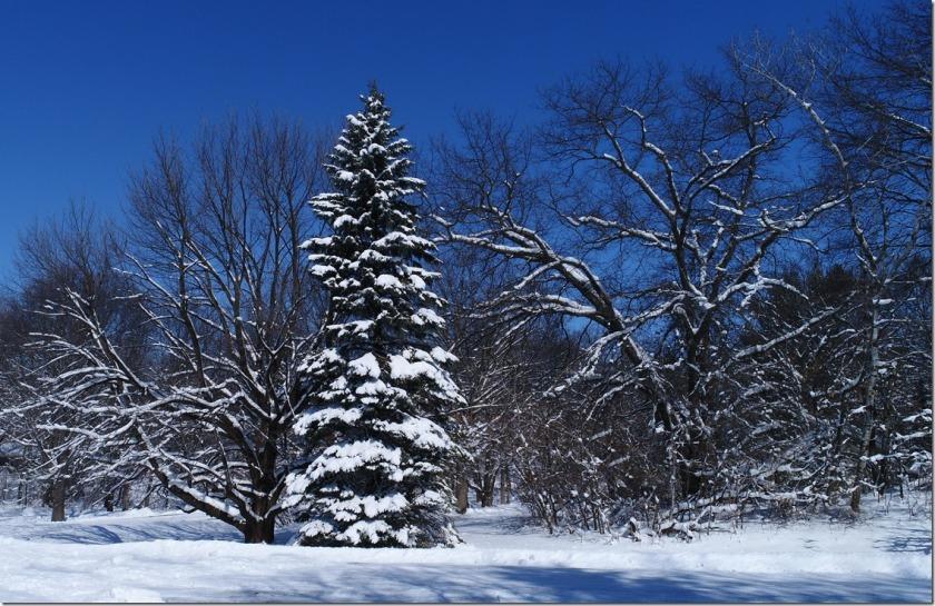 bbcut-snowshadows2