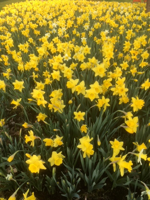 180503bbcut-spring2