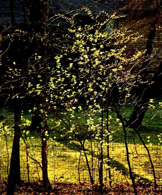 180508bbcut-flowers1