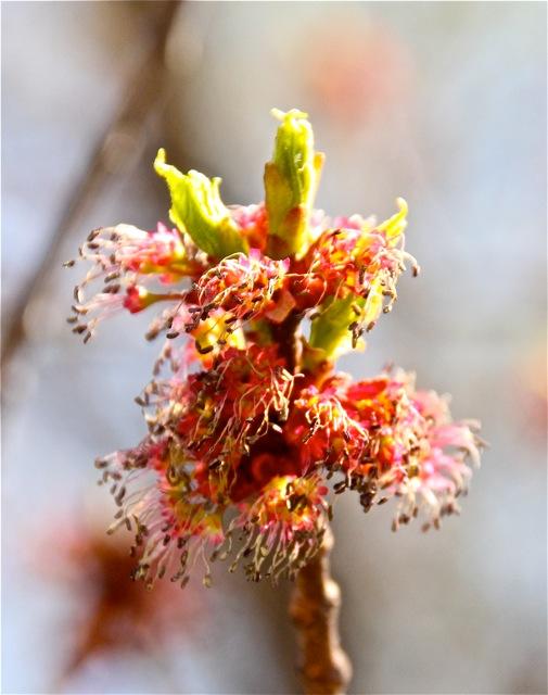180508bbcut-flowers2