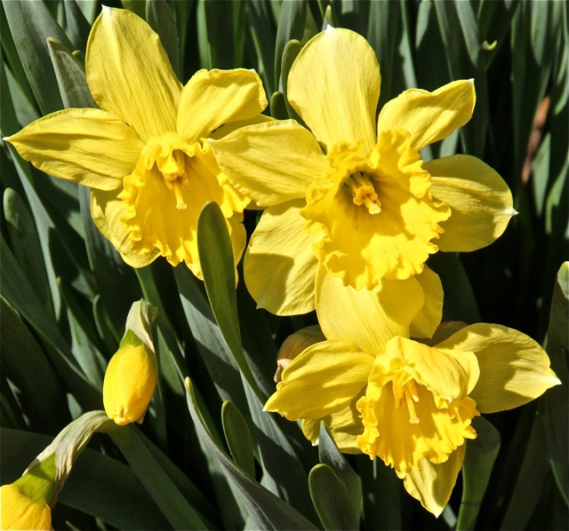 180508bbcut-flowers3