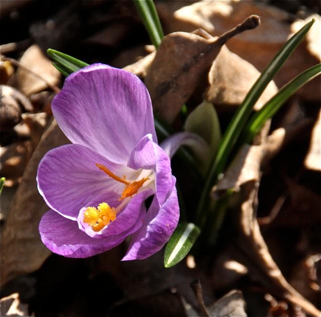 180508bbcut-flowers4