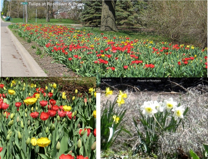 180508bbcut-flowers