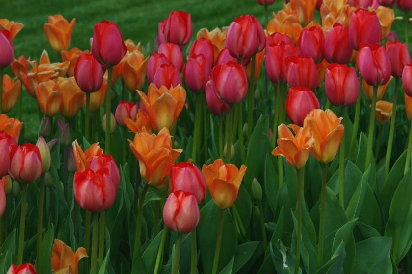 180514bbcut-flowers1