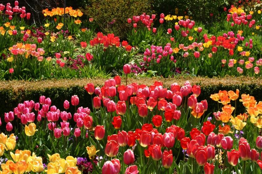 180514bbcut-flowers2