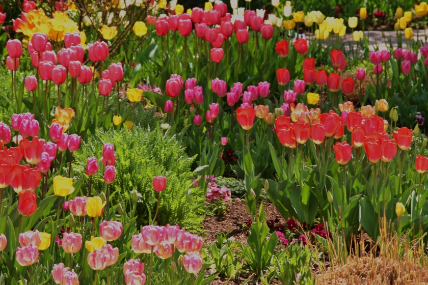 180514bbcut-flowers3