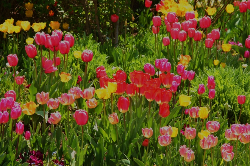 180514bbcut-flowers4